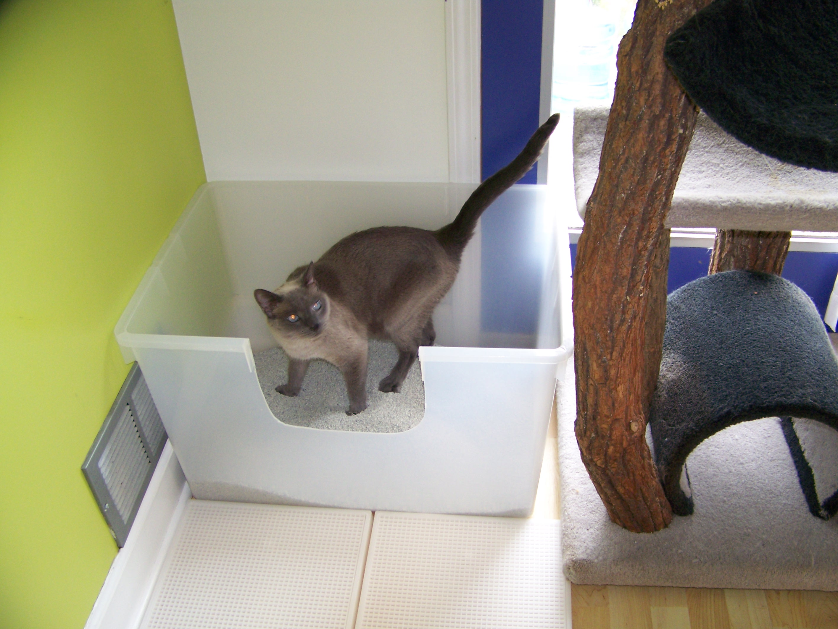 Our preferred litter box. The bigger the box the better!