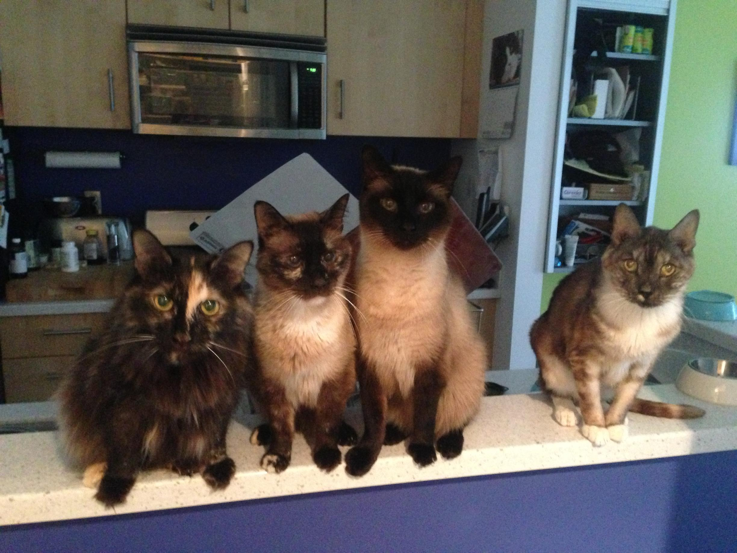 Did you ever think that your cats would be eager for their medications?