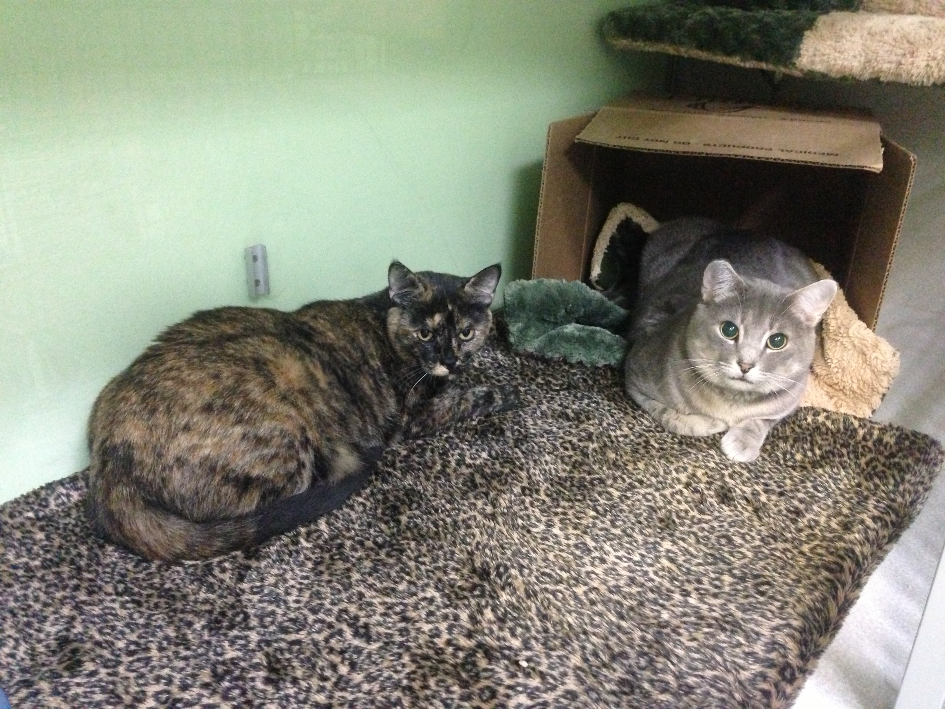 Raspy and Tucker, our clinic cats.