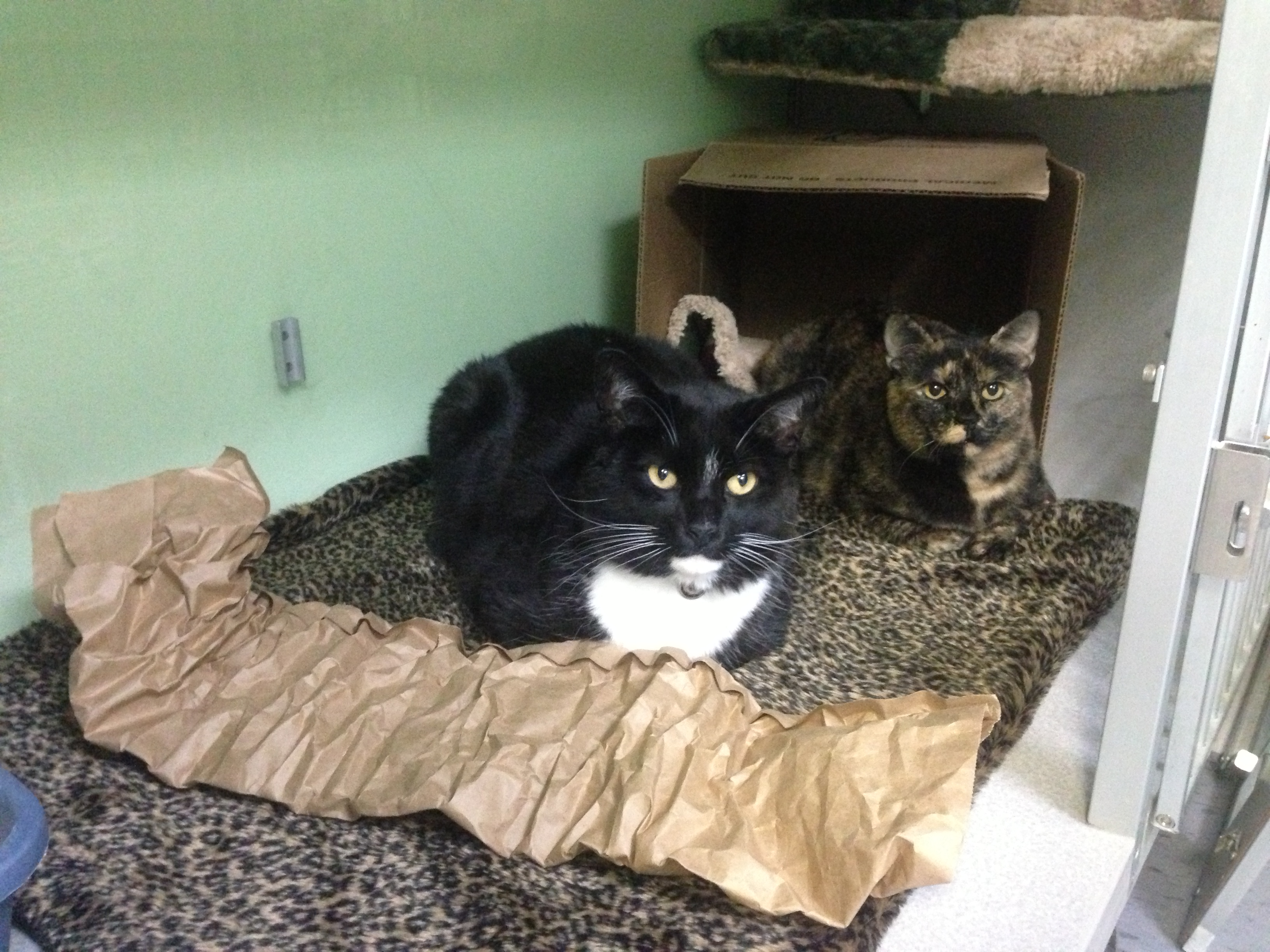 Two unrelated adult cats living together after being slowly & positively introduced.