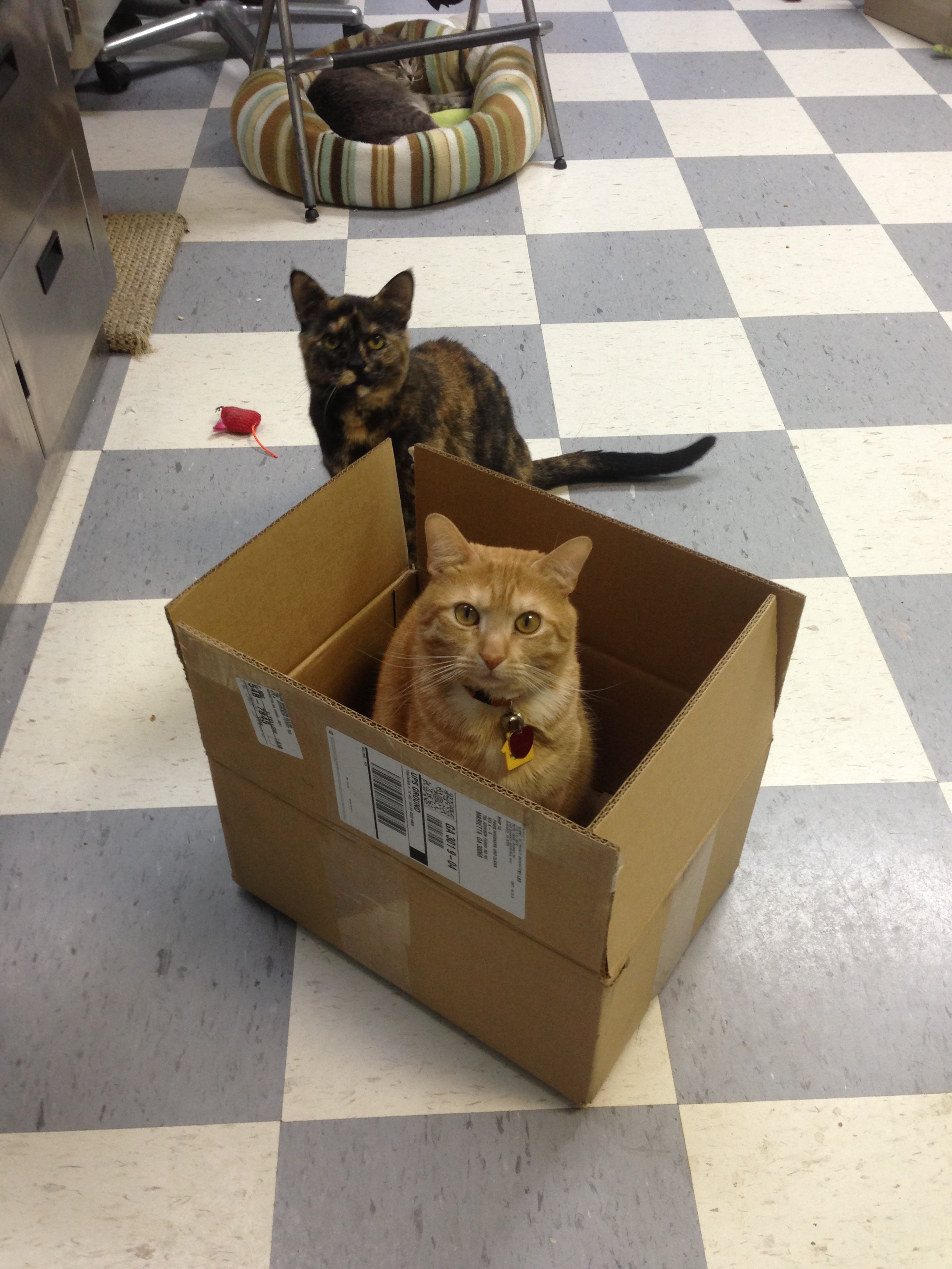 Adult cats introduced & living happily together.