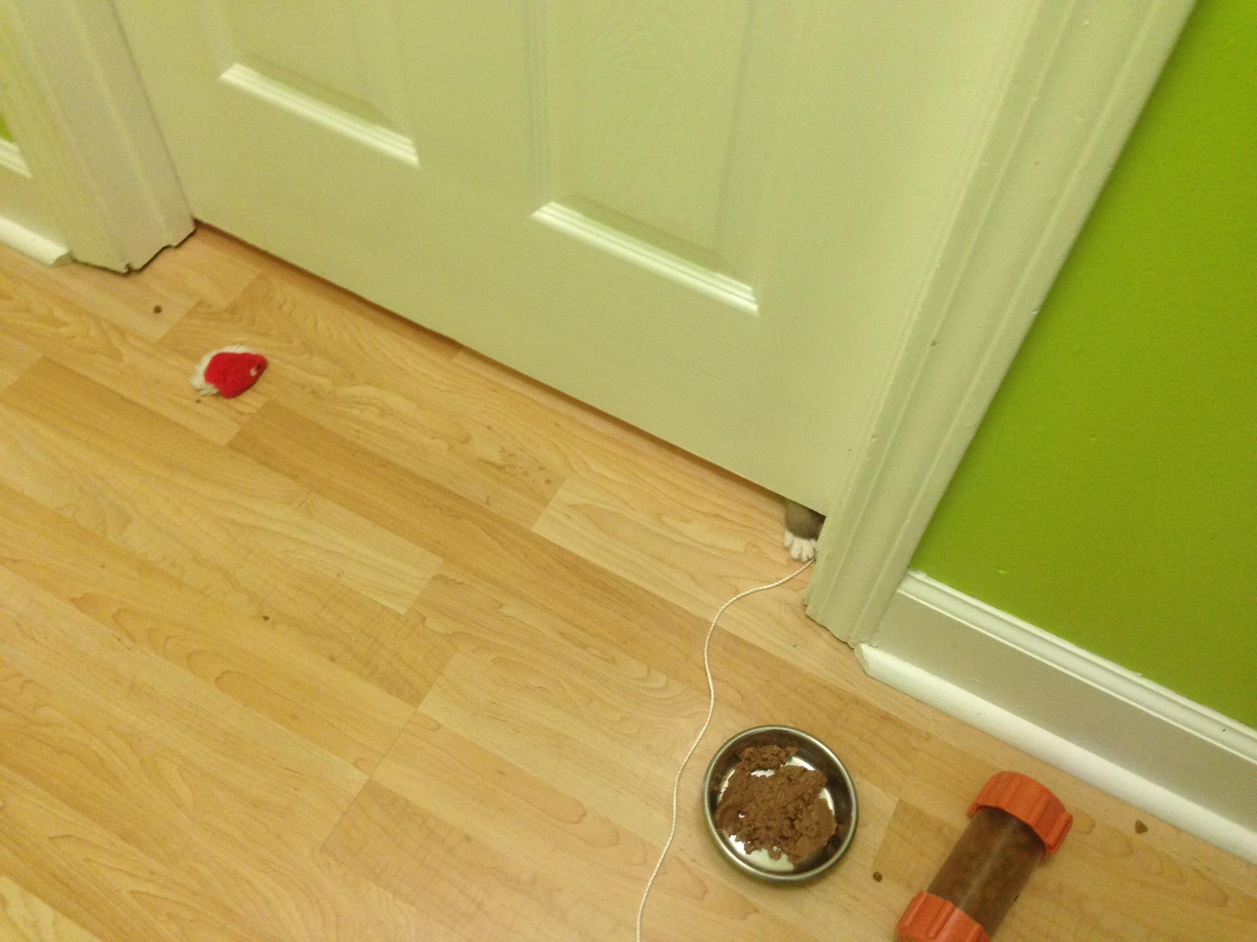 Toys, wet food, a food puzzle offered on both sides of a solid door (& cute footsie).