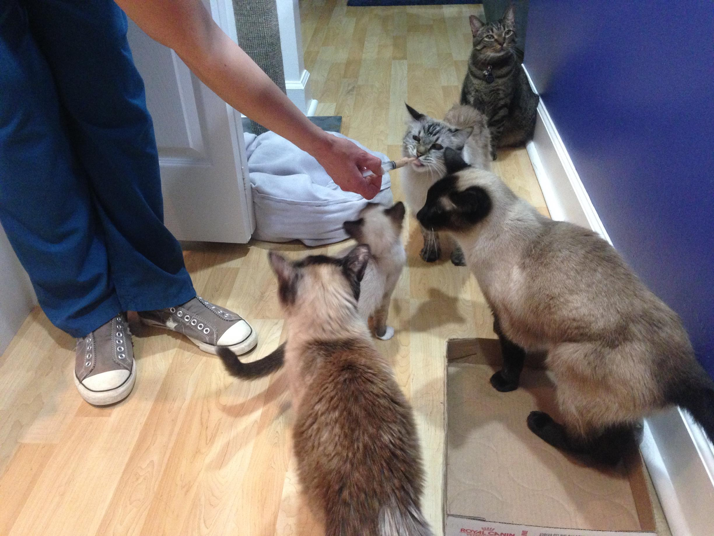A few words about how to accustom a cat to scratching