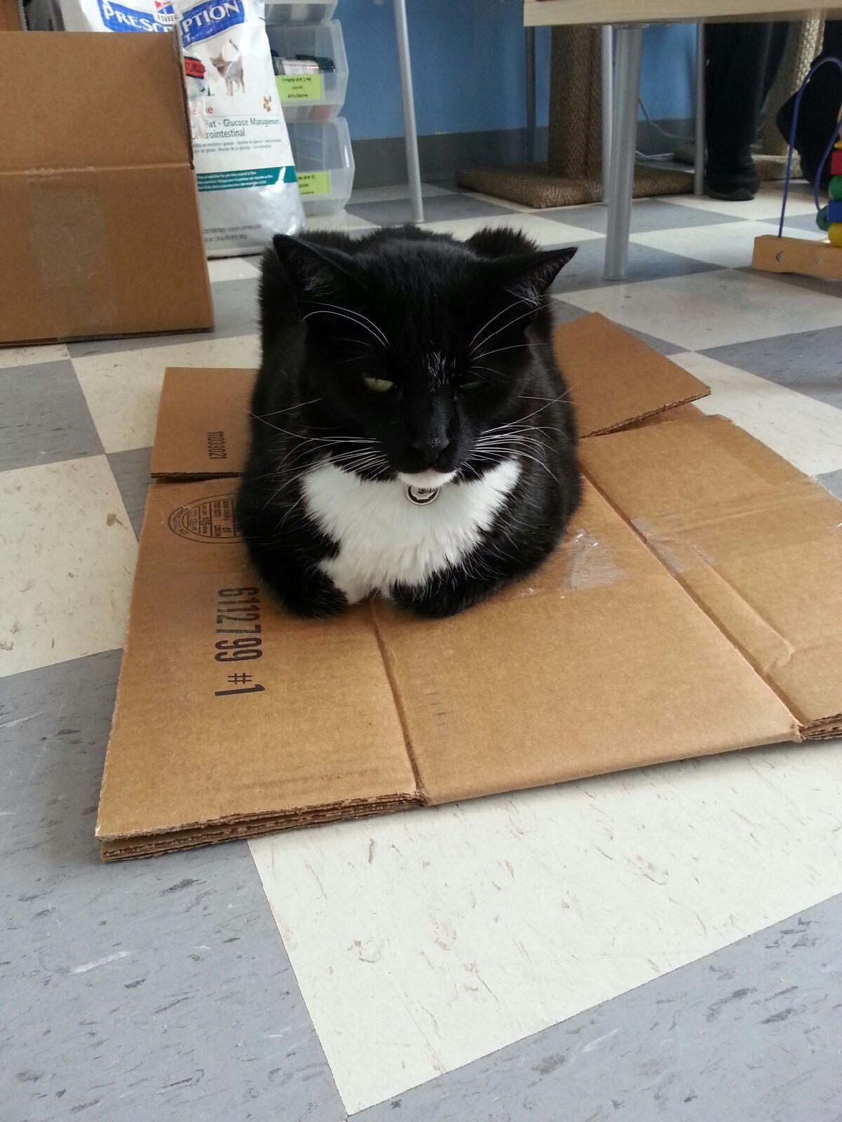 Squashed boxes are a okay too!