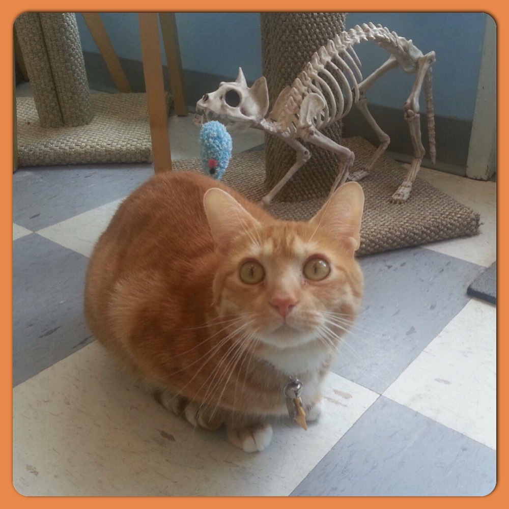 "Davis and ""Bones"" our very thin clinic cat!"