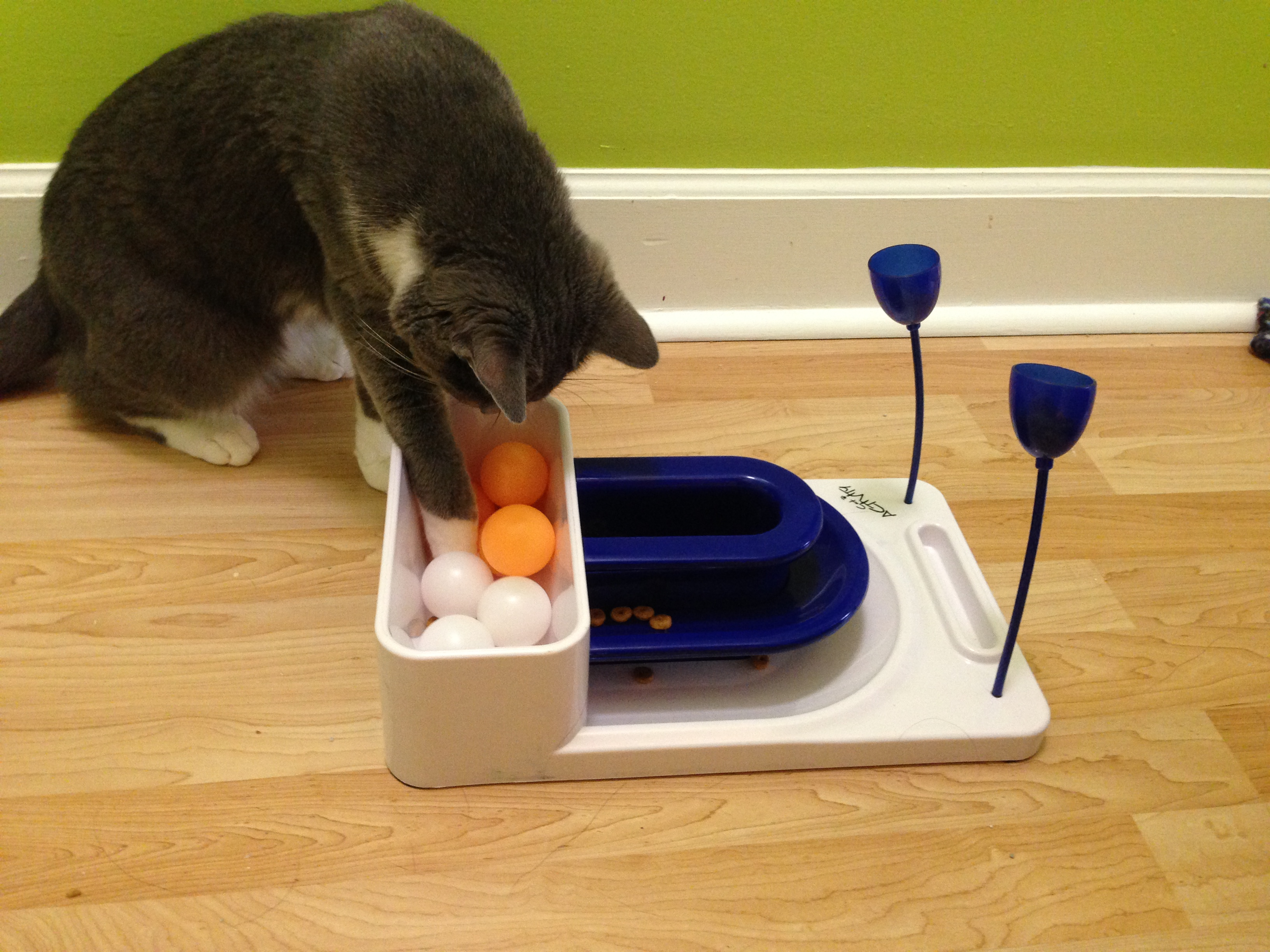Ping-pongs are an obstacle to obtaining the food.