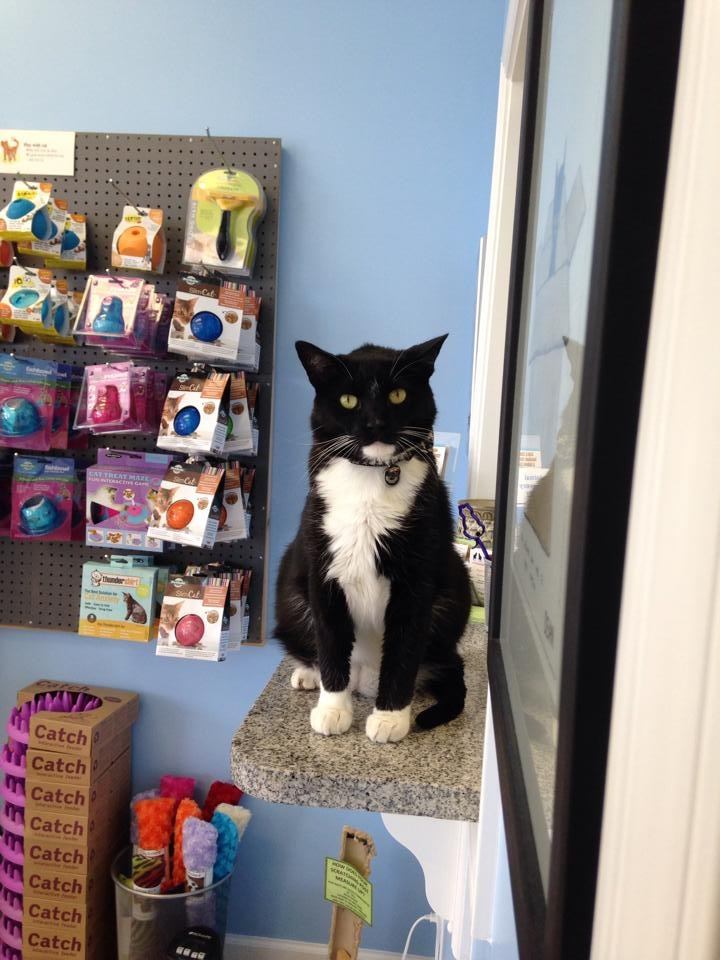 """Parker, the office """"assistant"""" and greeter!"""