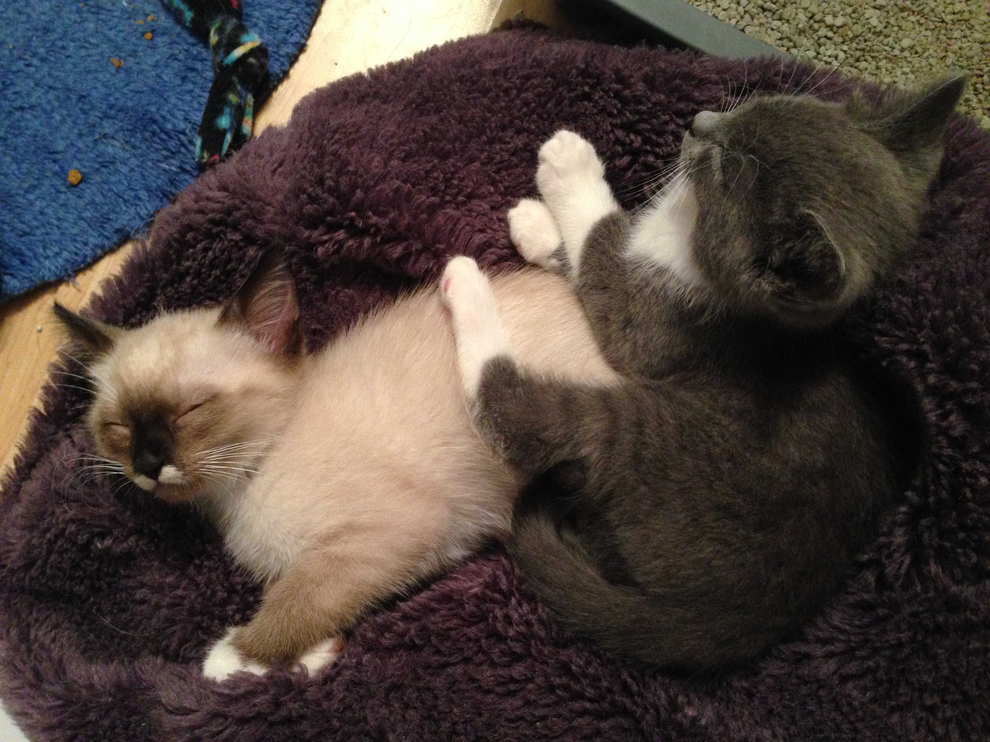 Willow and Soren as kittens
