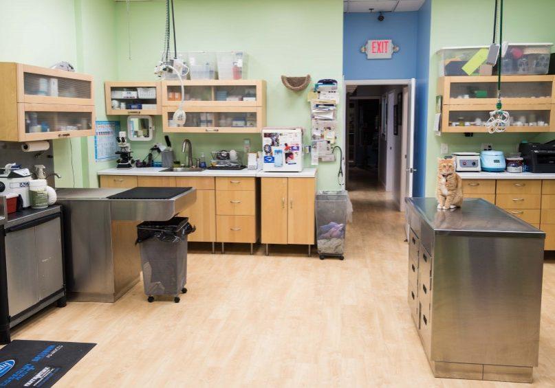 Treatment, Lab & Surgery Prep