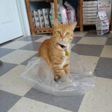 davis sitting on plastic bag