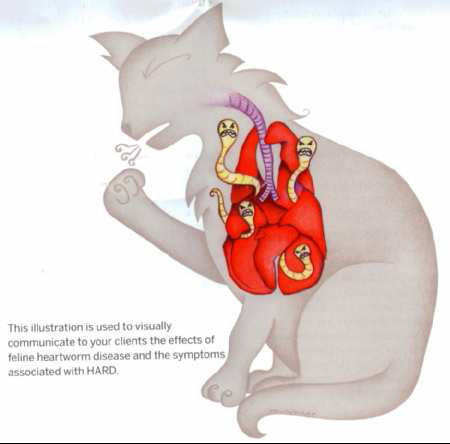 Heartworm Disease In Cats - Dr. Stephanie Globerman - Paws ...